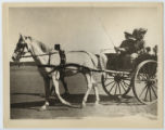 [Colonel Theodore Roosevelt and Edith Kermit Carow Roosevelt in Egypt]