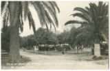 View of Samson's Orange Grove Trailer Court, City of Palms, McAllen, Texas