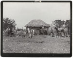 [Cowboys in front of small house with thatch roof on ranch]