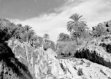 Oasis on the northern Sahara near Algiers, December 1943]