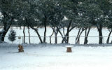 Snowfall, Bandera home, backyard, 1982