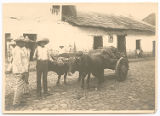 [Men with oxen and cart, Mexico]