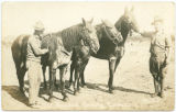 Wounded Cavalry Horses