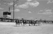 [Team Pulling Wilson & Co. Wagon, Clydesdale Draft Horse Showing, Pin Oak Charity Horse Show]