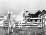 [Josephine Abercrombie Sitting on Corral Gate with Horses, Pin Oak Charity Horse Show]