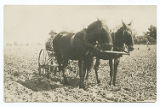 [Farmer and mule team plowing field]