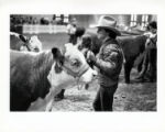 [Boy with cow at livestock show]