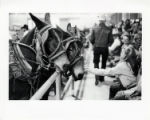 [Girl reaching out to mule, State Fair of Texas]
