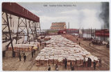 Loading Cotton, Galveston, Tex.