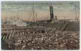 Loading Cotton from the Largest Cotton Port in the World, Galveston, Texas.