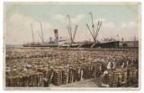 Shipping Cotton, Galveston, Texas.